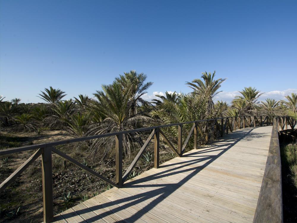 Guardamar del Segura dunas